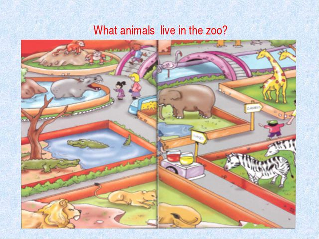 What animals live in the zoo?
