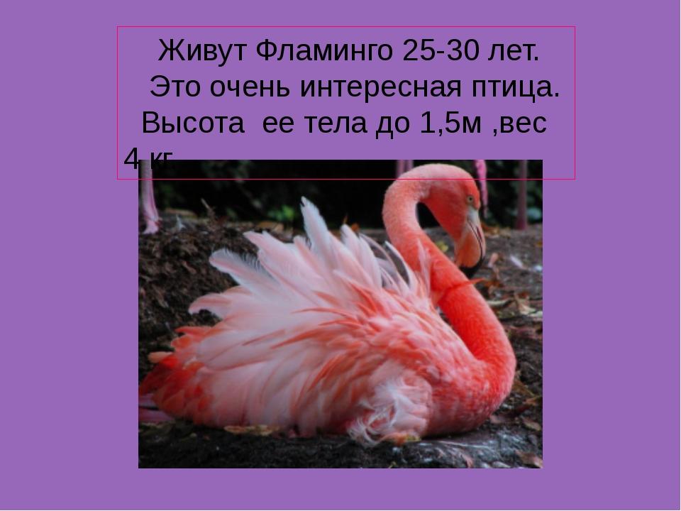Фламинго доклад красная книга 3732