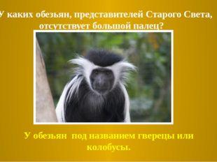 2.У каких обезьян, представителей Старого Света, отсутствует большой палец? У
