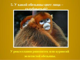 5. У какой обезьяны цвет лица – голубоватый? У рокселланов ринопитек или курн