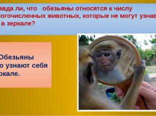5.Правда ли, что обезьяны относятся к числу немногочисленных животных, которы