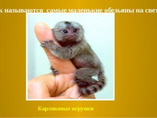 1.Как называются самые маленькие обезьяны на свете? Карликовые игрунки