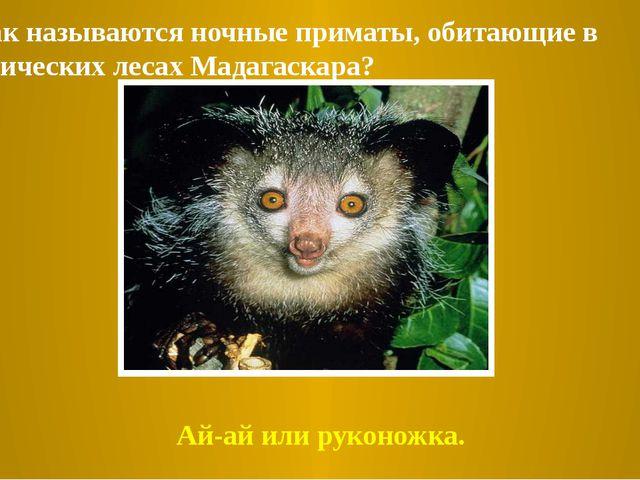 3. Как называются ночные приматы, обитающие в тропических лесах Мадагаскара?...