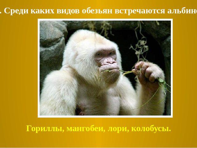Гориллы, мангобеи, лори, колобусы. 4. Среди каких видов обезьян встречаются а...