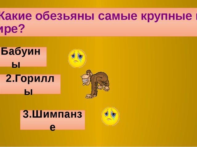 2.Какие обезьяны самые крупные в мире? 1.Бабуины 2.Гориллы 3.Шимпанзе