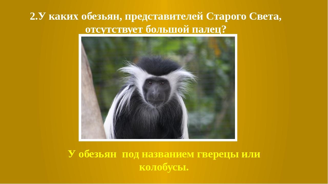 2.У каких обезьян, представителей Старого Света, отсутствует большой палец? У...