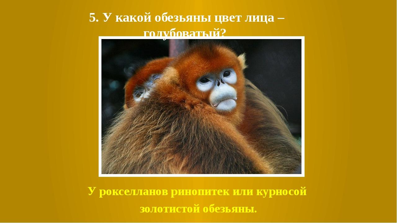 5. У какой обезьяны цвет лица – голубоватый? У рокселланов ринопитек или курн...