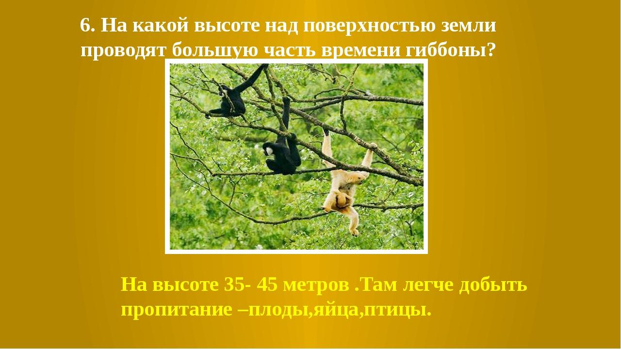 6. На какой высоте над поверхностью земли проводят большую часть времени гибб...