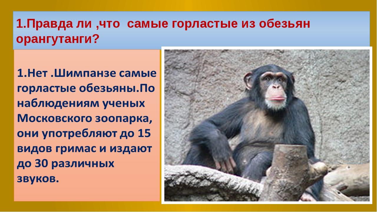 1.Правда ли ,что самые горластые из обезьян орангутанги?