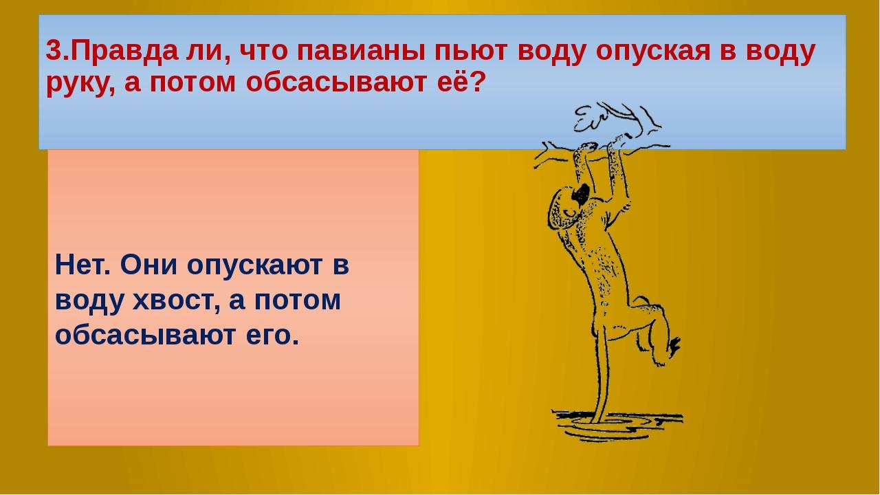 3.Правда ли, что павианы пьют воду опуская в воду руку, а потом обсасывают её...