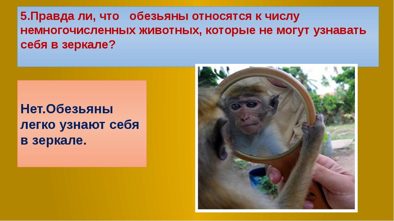 5.Правда ли, что обезьяны относятся к числу немногочисленных животных, которы...