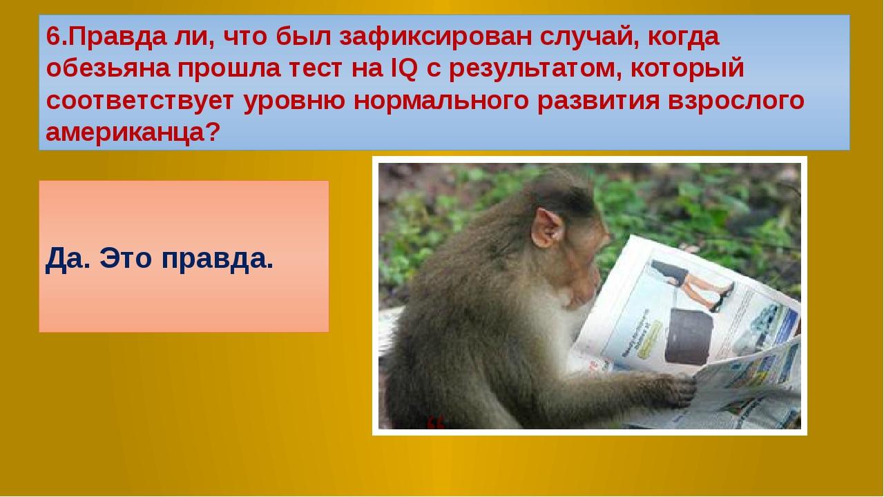 6.Правда ли, что был зафиксирован случай, когда обезьяна прошла тест на IQ с...