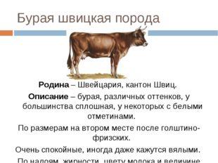 Бурая швицкая порода Родина – Швейцария, кантон Швиц. Описание – бурая, разли