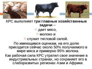 КРС выполняет три главные хозяйственные задачи – дает мясо, молоко и служит т