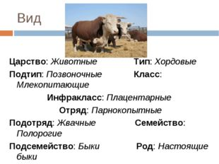 Вид Царство: Животные Тип: Хордовые Подтип: Позвоночные Класс: Млекопитающие