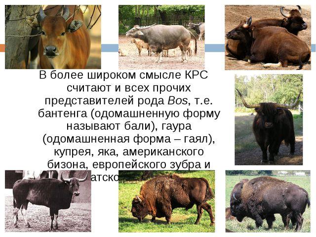 Алфавитный определитель животных / Животные на букву «Б» / Бантенг | 480x640