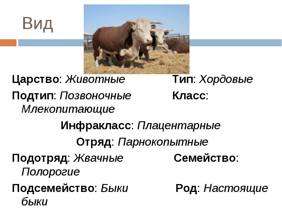 Вид Царство: Животные Тип: Хордовые Подтип: Позвоночные Класс: Млекопитающие...