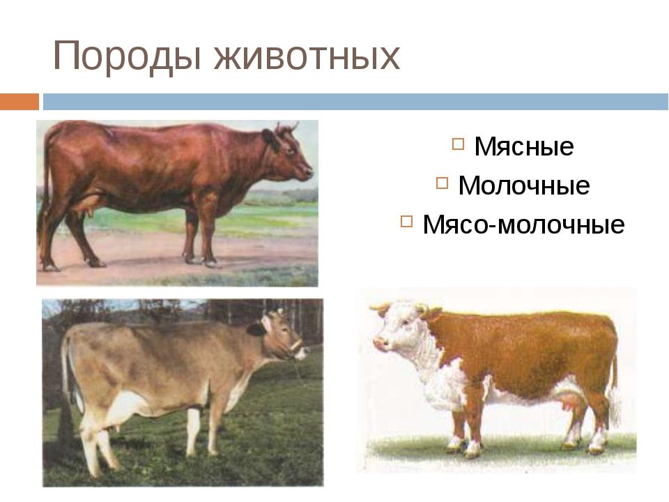 Породы животных Мясные Молочные Мясо-молочные