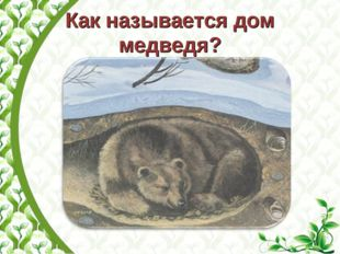 Как называется дом медведя?