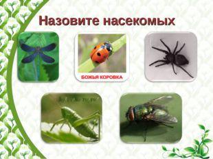 Назовите насекомых