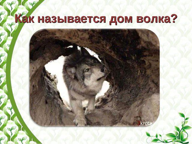Как называется дом волка?
