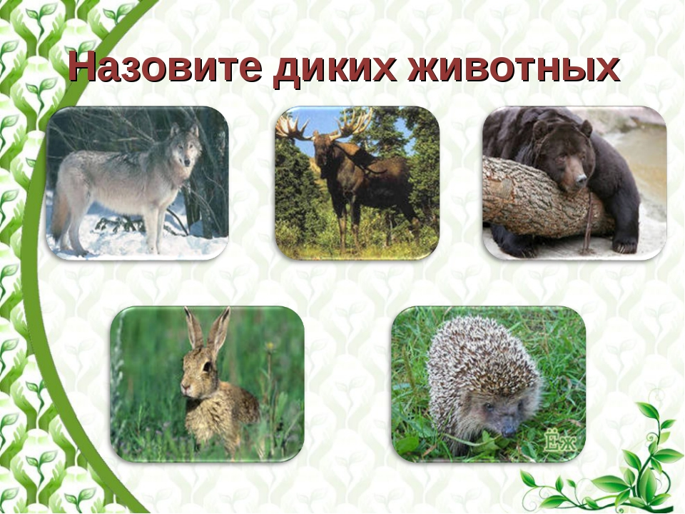 Назовите диких животных