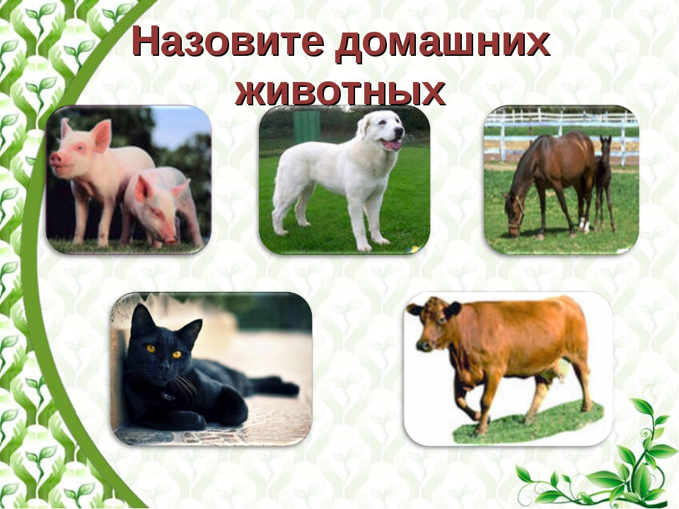 Назовите домашних животных