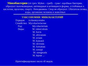 ТАКСОНОМИЯ МИКОБАКТЕРИЙ Порядок: Actinomycetales Семейство: Mycobacteriaceae