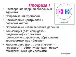 Профаза I Растворение ядерной оболочки и ядрышка Спирализация хромосом Расхо