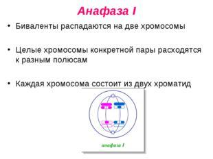 Анафаза I Биваленты распадаются на две хромосомы Целые хромосомы конкретной п