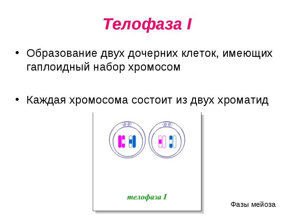 Телофаза I Образование двух дочерних клеток, имеющих гаплоидный набор хромосо...