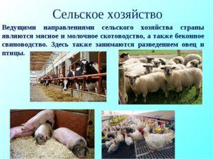 Сельское хозяйство Ведущими направлениями сельского хозяйства страны являются