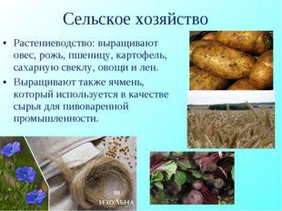 Сельское хозяйство Растениеводство: выращивают овес, рожь, пшеницу, картофель