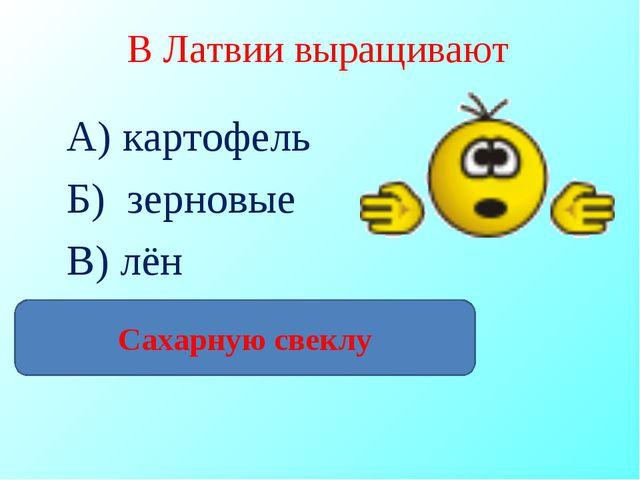 В Латвии выращивают А) картофель Б) зерновые В) лён Г) сахарный тростник Саха...