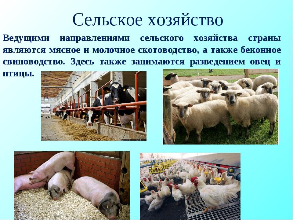 Сельское хозяйство Ведущими направлениями сельского хозяйства страны являются...