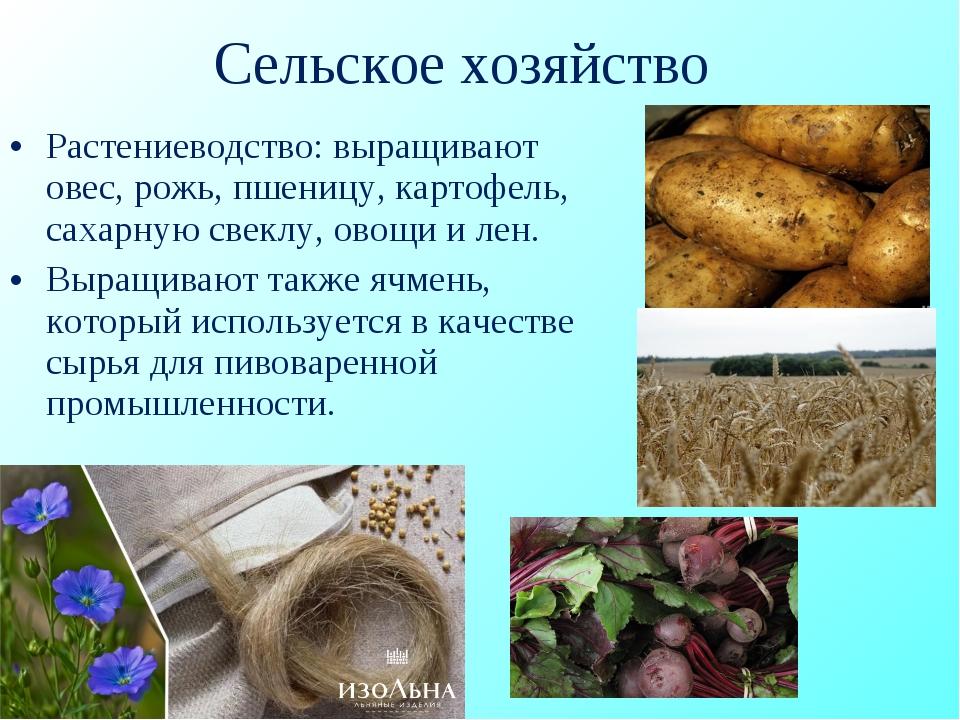Сельское хозяйство Растениеводство: выращивают овес, рожь, пшеницу, картофель...