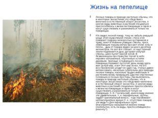 Жизнь на пепелище Лесные пожары в природе настолько обычны, что в некоторых э