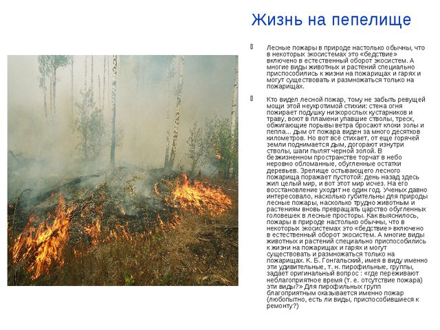 Жизнь на пепелище Лесные пожары в природе настолько обычны, что в некоторых э...