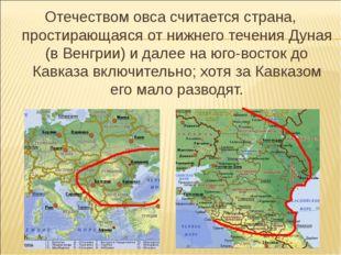 Отечеством овса считается страна, простирающаяся от нижнего течения Дуная (в