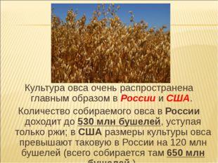 Культура овса очень распространена главным образом в России и США. Количество