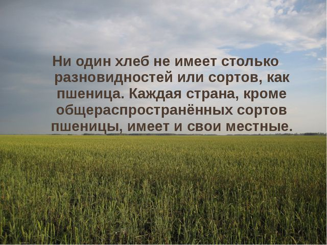 Ни один хлеб не имеет столько разновидностей или сортов, как пшеница. Каждая...