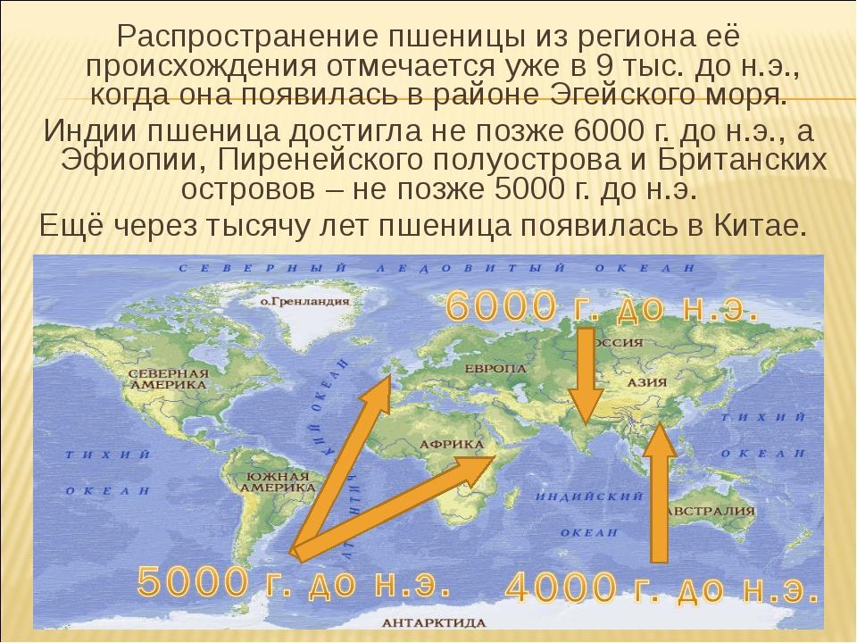 Распространение пшеницы из региона её происхождения отмечается уже в 9 тыс. д...