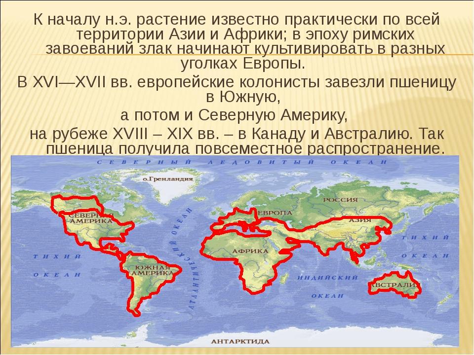 К началу н.э. растение известно практически по всей территории Азии и Африки;...