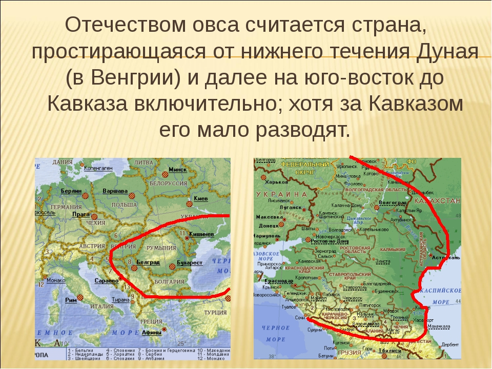 Отечеством овса считается страна, простирающаяся от нижнего течения Дуная (в...