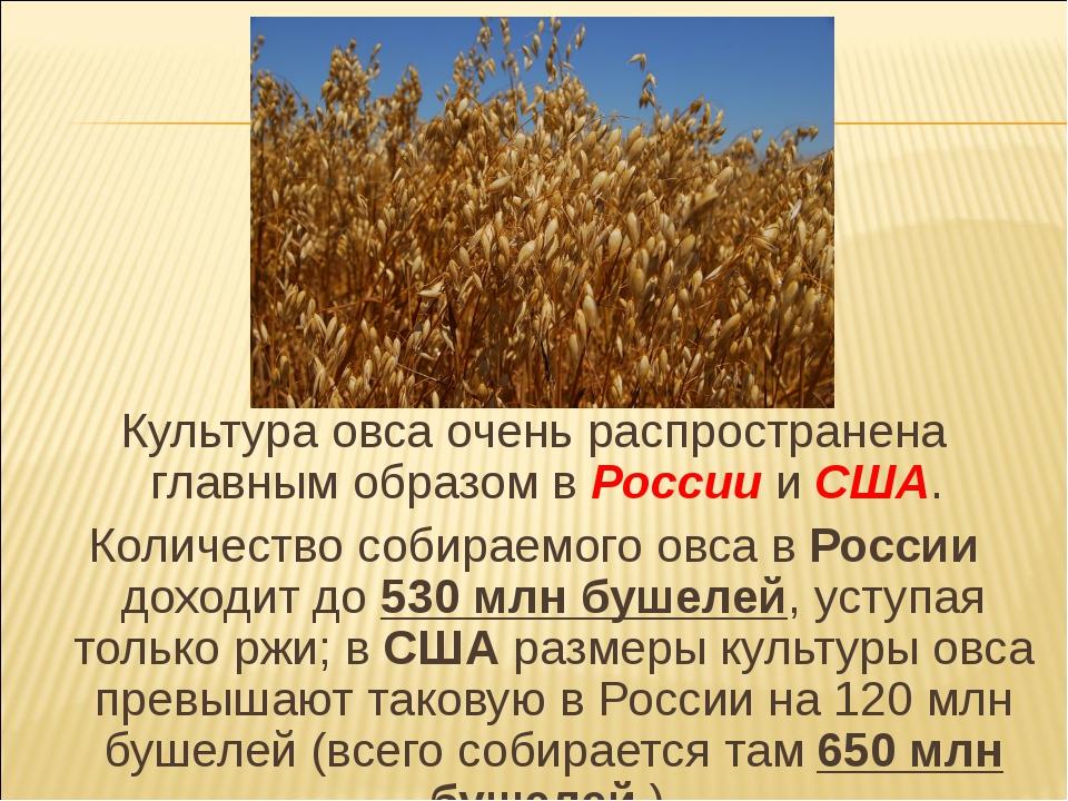Культура овса очень распространена главным образом в России и США. Количество...