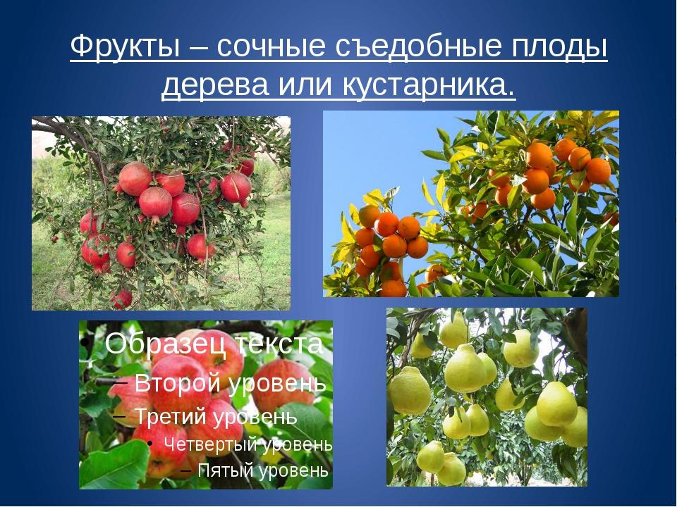 Фрукты – сочные съедобные плоды дерева или кустарника.
