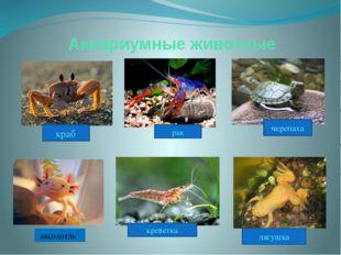 Аквариумные животные лягушка аксолотль черепаха креветка рак краб