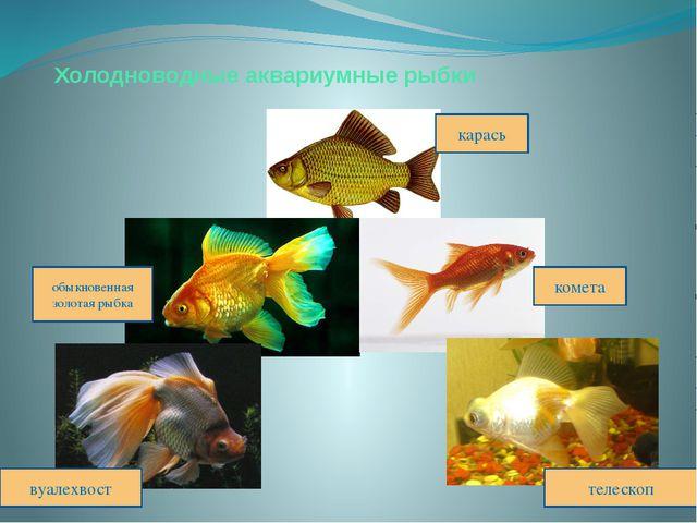 Холодноводные аквариумные рыбки карась обыкновенная золотая рыбка комета вуал...