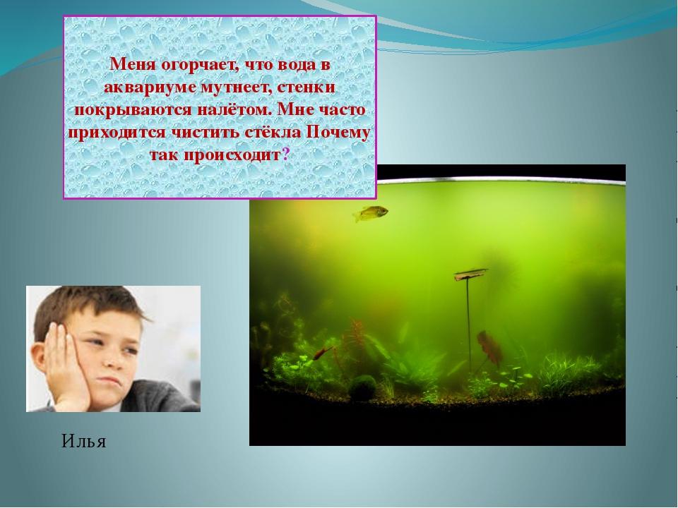Илья Меня огорчает, что вода в аквариуме мутнеет, стенки покрываются налётом....