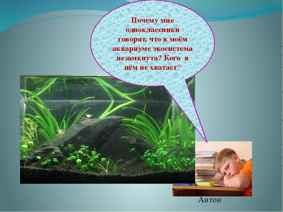 Антон Почему мне одноклассники говорят, что в моём аквариуме экосистема незам...